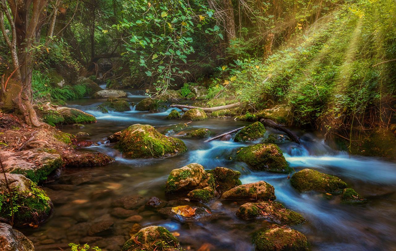 Картинки Лучи света Ручей Природа Леса Мох Камень ручеек мха мхом Камни