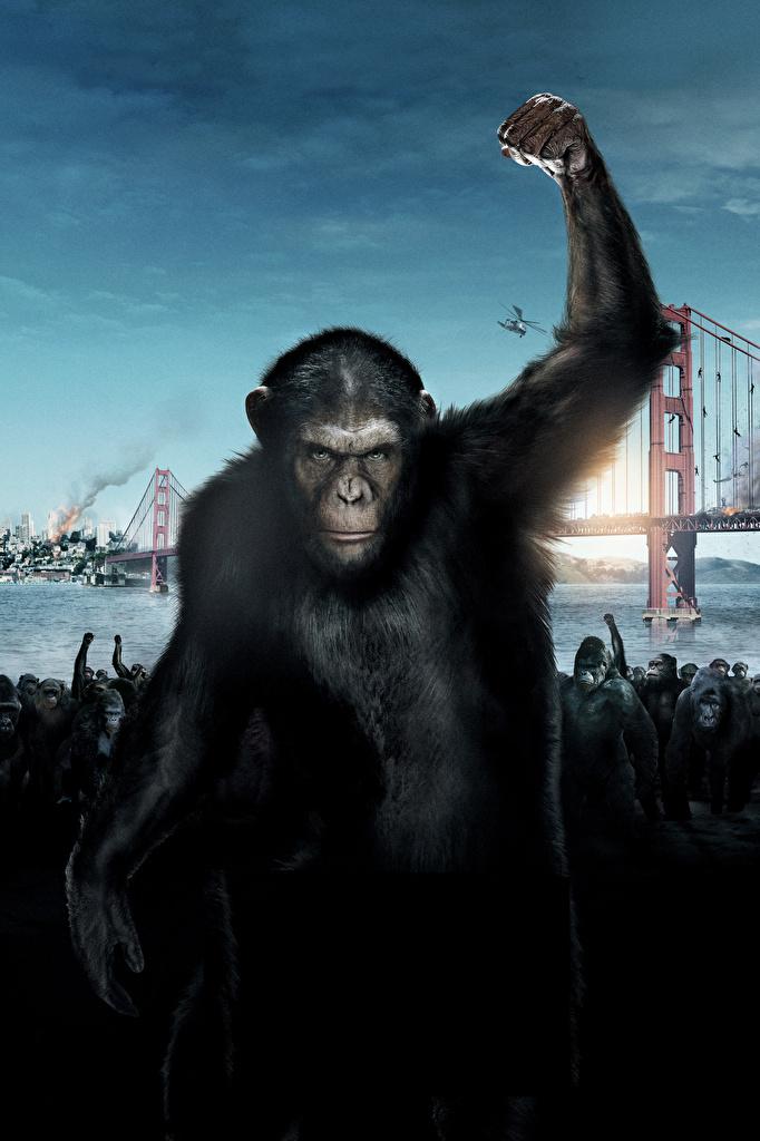 Картинка Восстание планеты обезьян Обезьяны Хмурость Кино Недовольство Фильмы