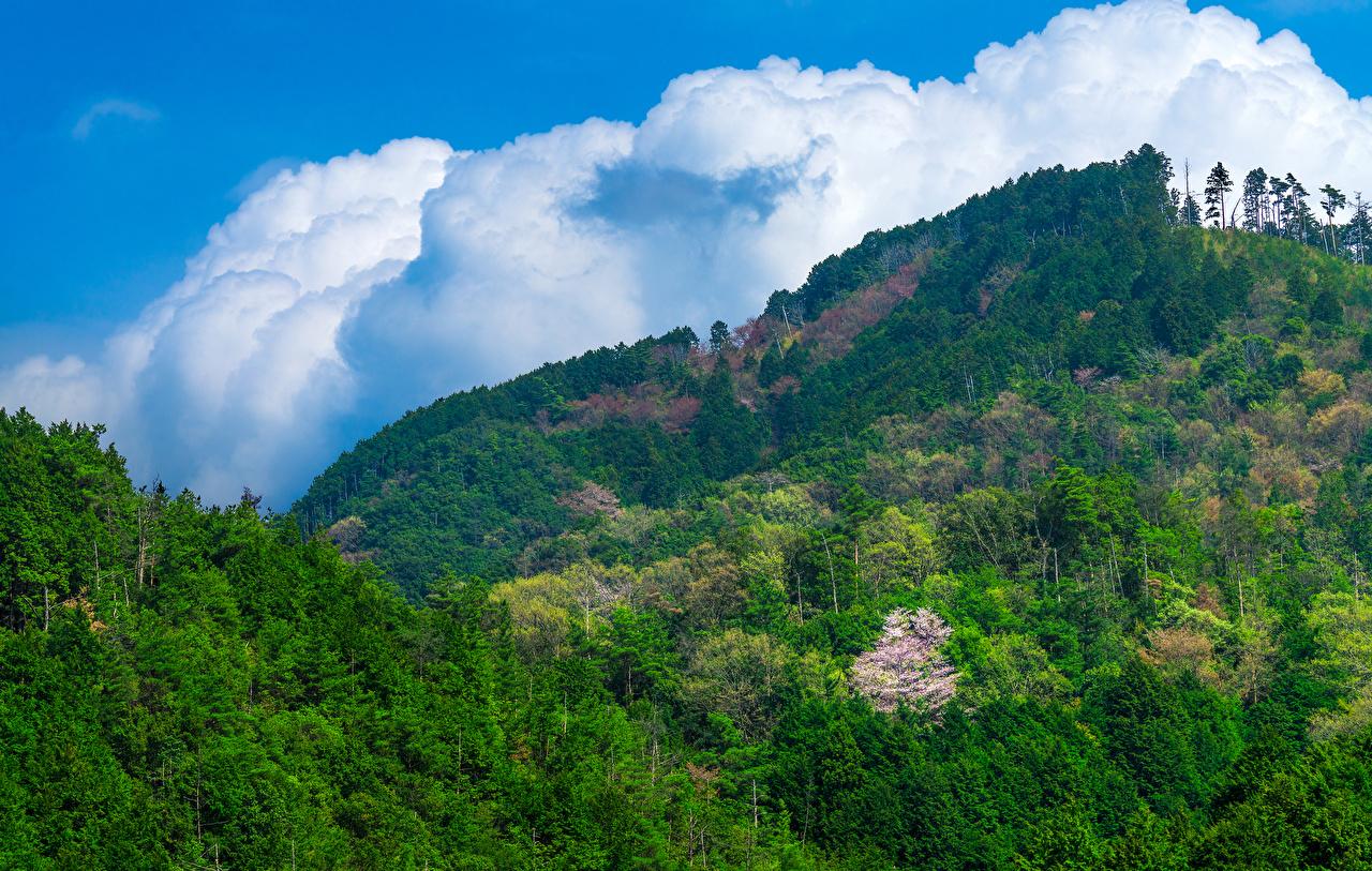 Картинки Япония гора Природа лес Горы Леса