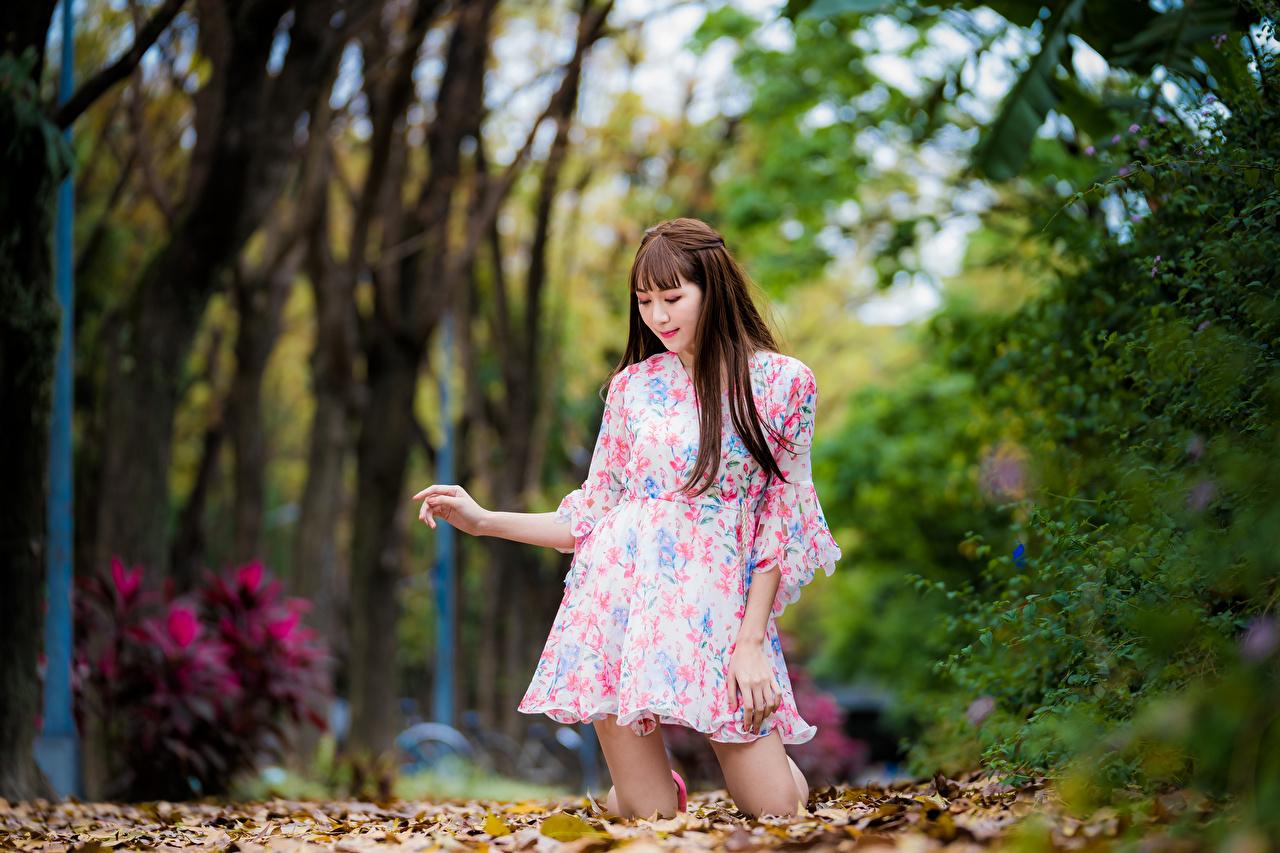 Картинка Листва шатенки боке Осень Девушки Азиаты Платье лист Листья Шатенка Размытый фон осенние девушка молодая женщина молодые женщины азиатки азиатка платья