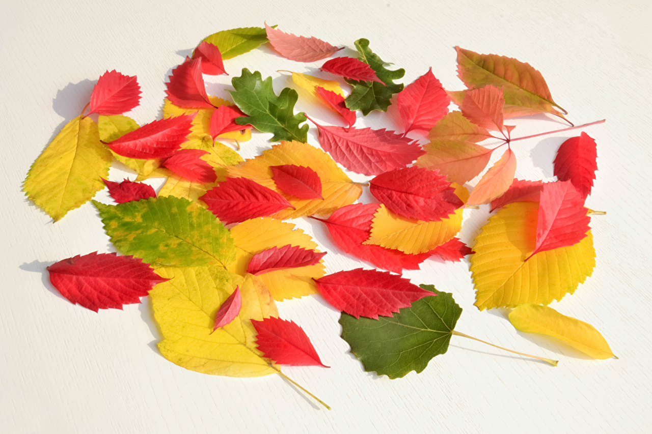 Фотография лист Разноцветные Осень Природа Листья Листва осенние