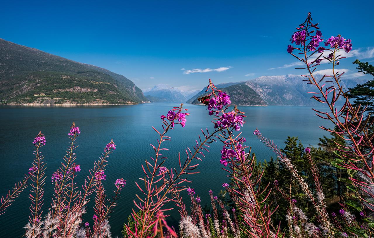 Картинка Норвегия Hardangerfjord Горы Природа Небо гора