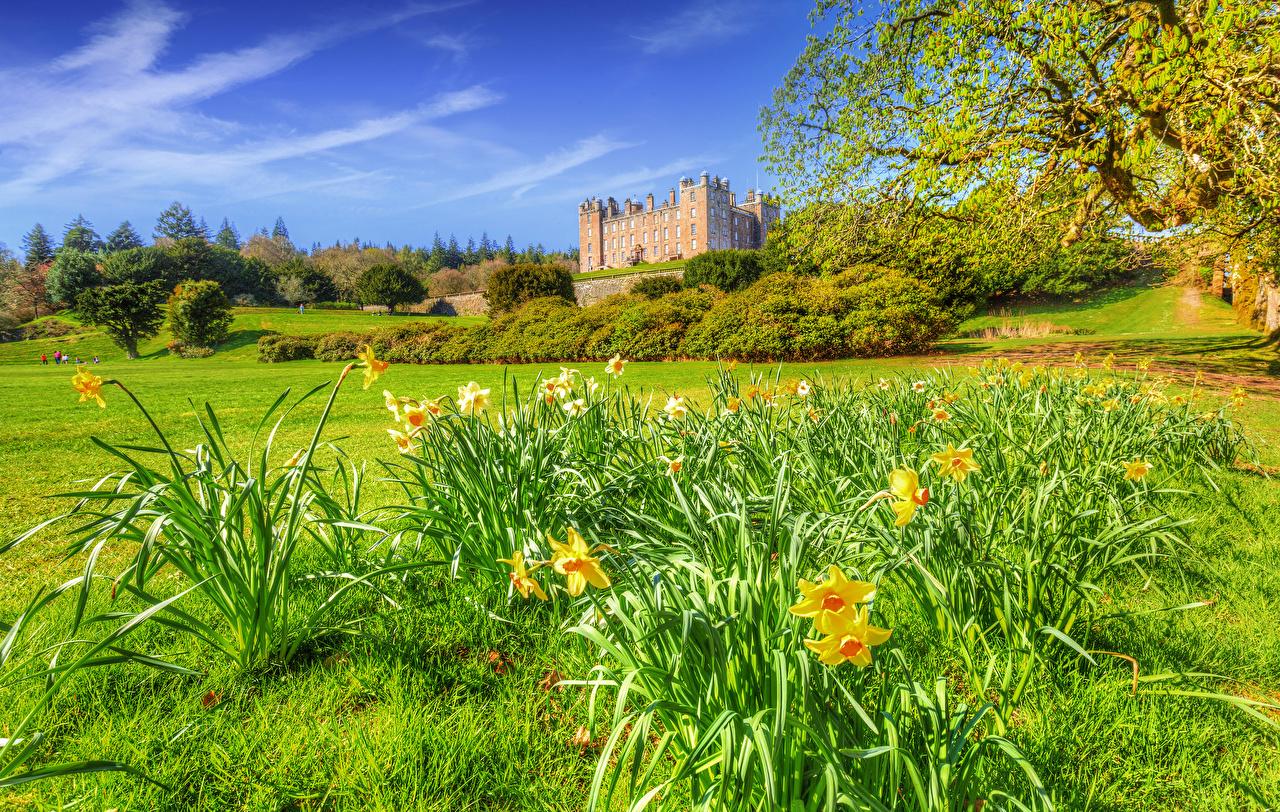 Обои для рабочего стола Великобритания Drumlanrig Castle HDR Весна замок Природа Нарциссы Трава город Кусты HDRI Замки весенние траве Города кустов