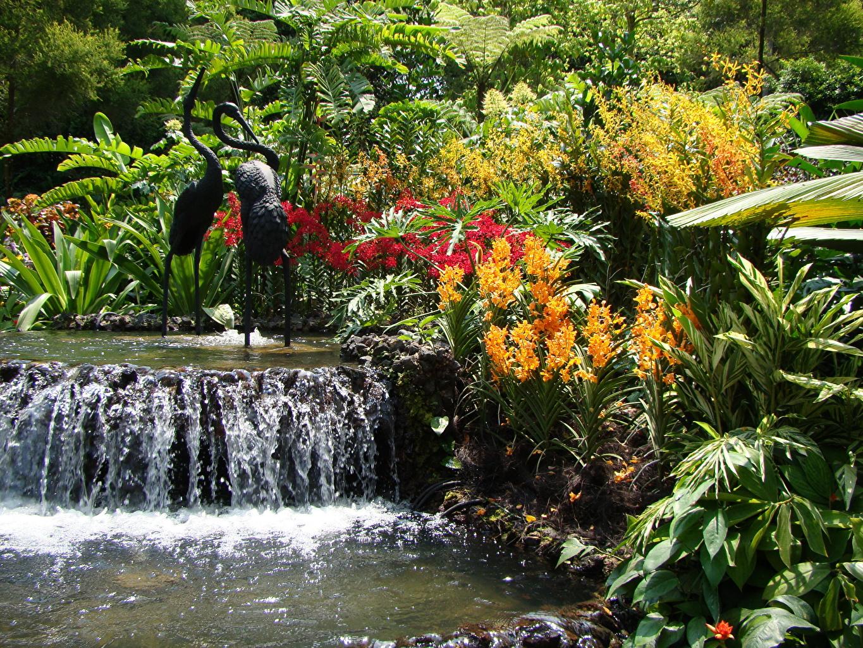 Фотография Singapore Orchid Природа Водопады Сады Пруд