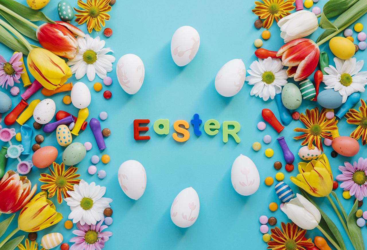 Картинки Пасха инглийские яиц тюльпан Конфеты Хризантемы Шарики Праздники Цветной фон английская Английский яйцо Яйца яйцами Тюльпаны Шар