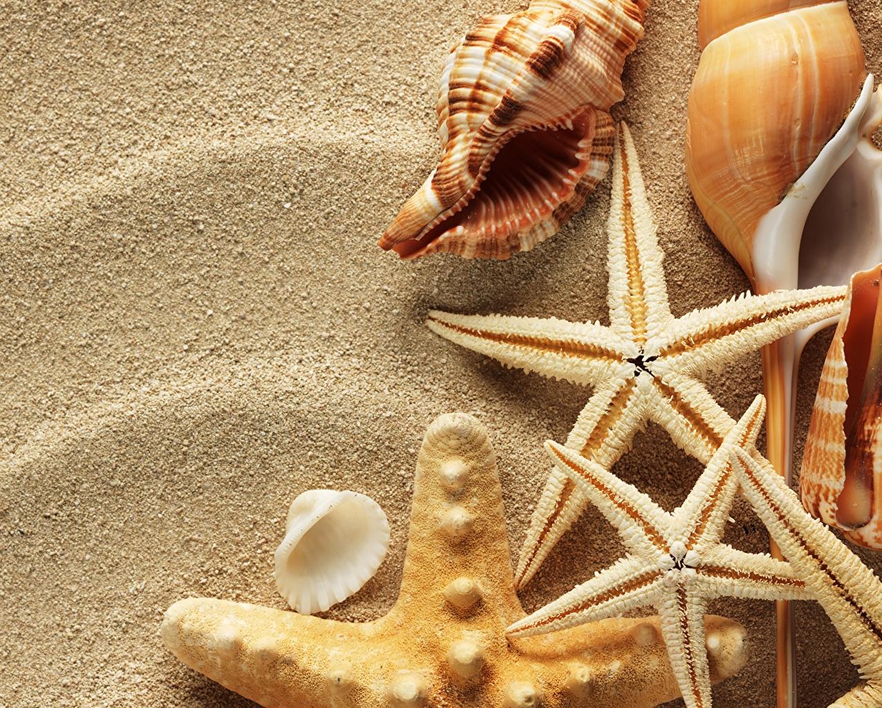 Обои ракушка, морская звезда. Разное foto 14