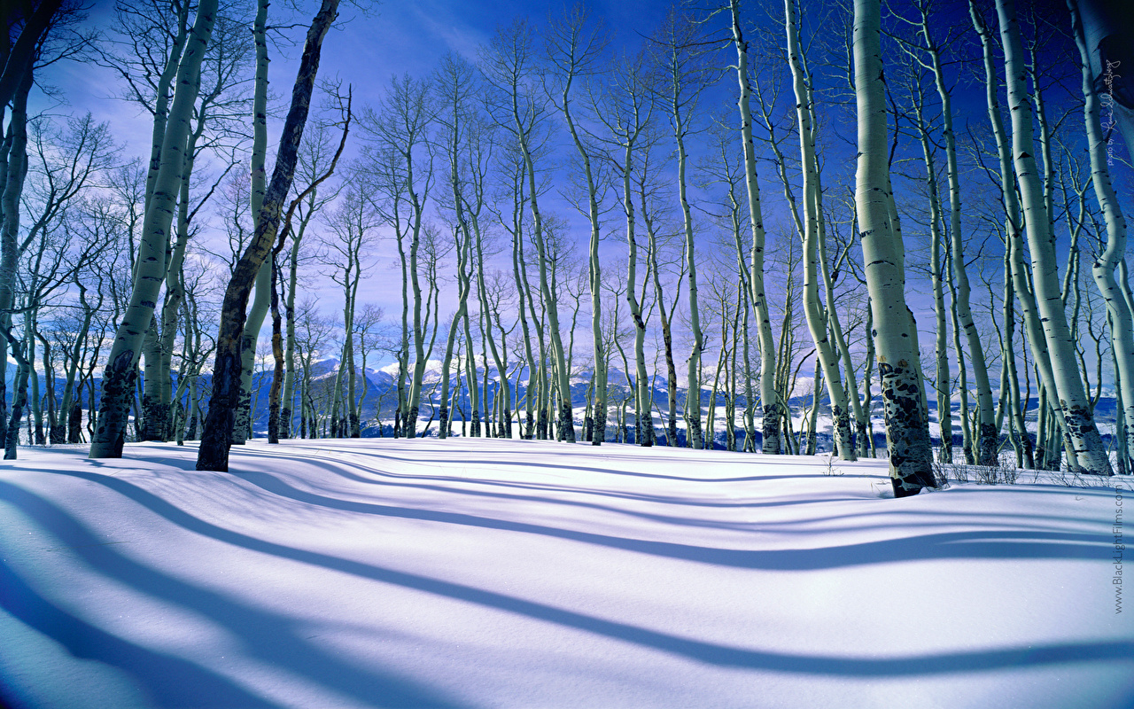 Картинка зимние береза Природа снега деревьев Зима Березы Снег снегу снеге дерево дерева Деревья
