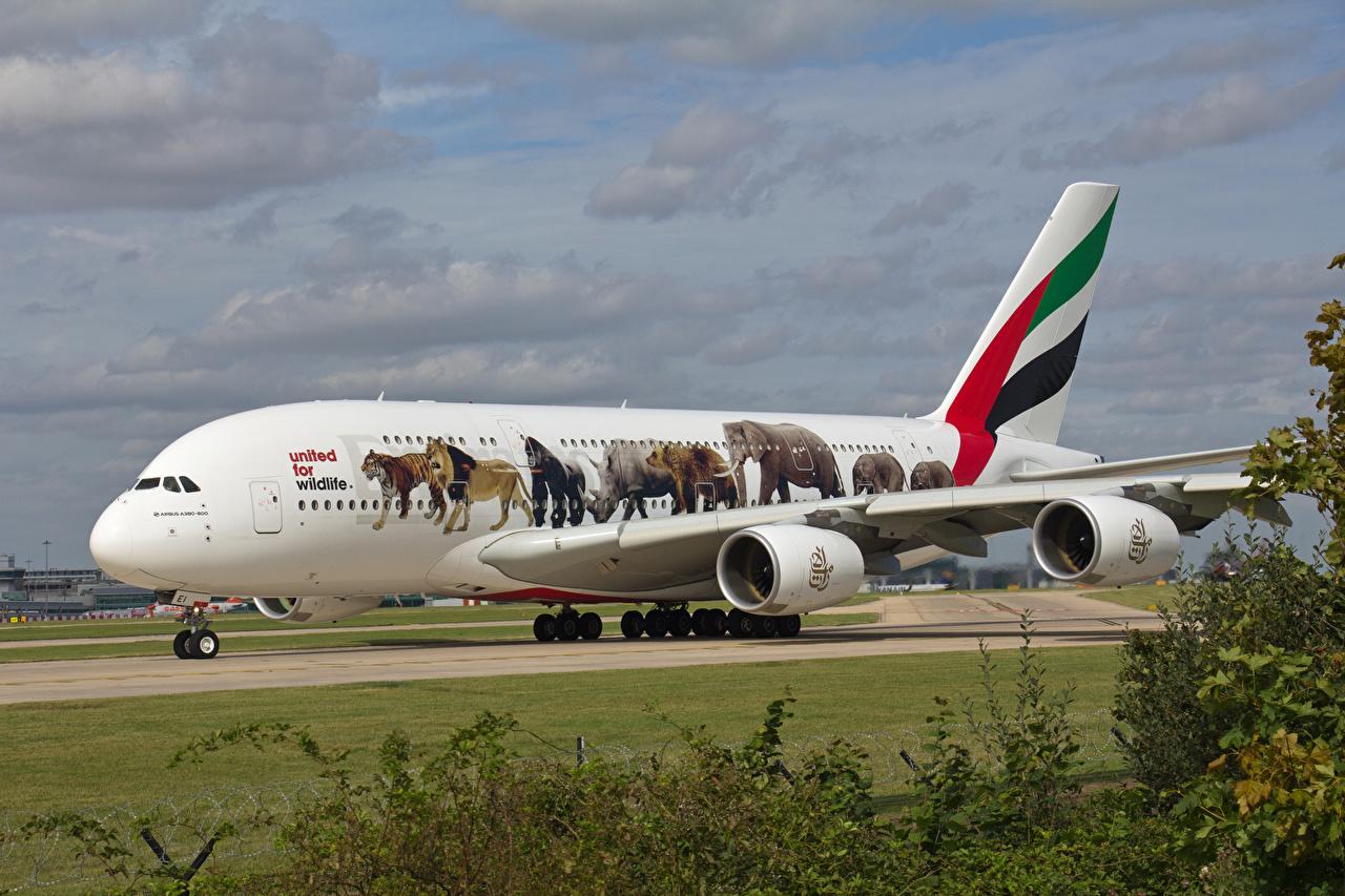 Картинки Airbus Самолеты Пассажирские Самолеты A380-800 Авиация Эйрбас