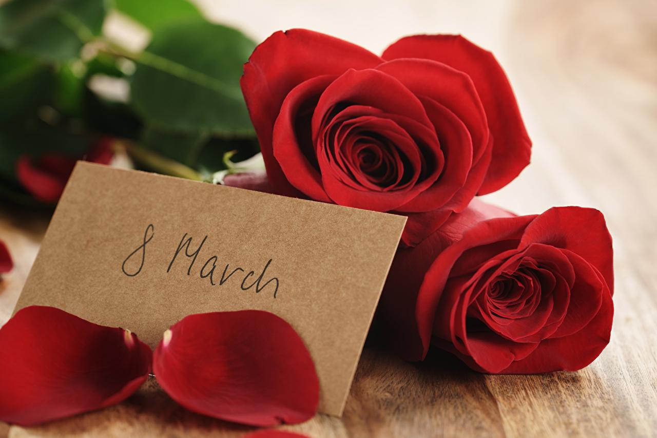 Картинка 8 марта Розы Красный Лепестки Цветы Праздники