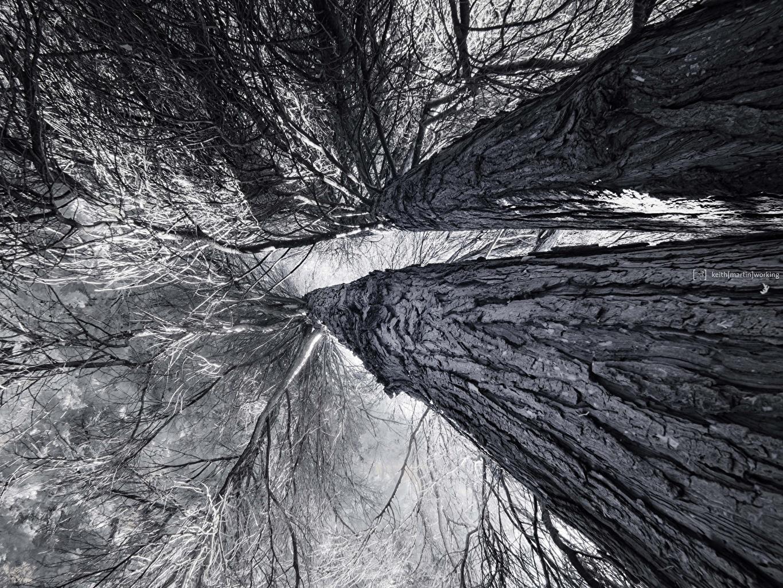 Картинки Вид снизу Природа Ствол дерева ветвь Черно белое деревьев ветка Ветки на ветке черно белые дерево дерева Деревья