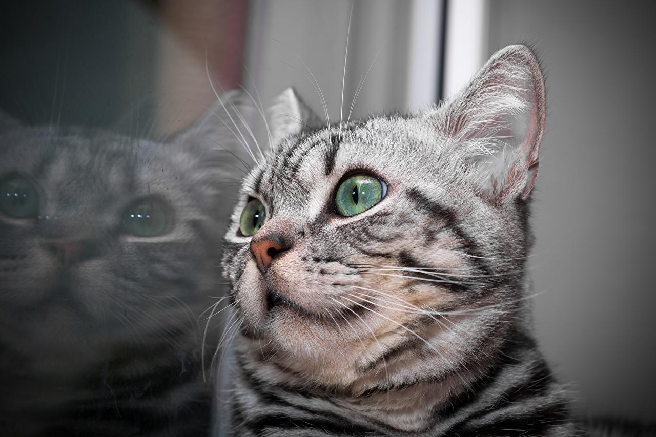 Фотография котенок кошка Отражение Усы Вибриссы Голова животное Крупным планом котят Котята котенка кот коты Кошки отражении отражается вблизи головы Животные