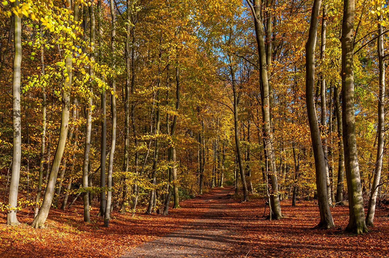Фото Листья Германия Eastern Eifel Осень Природа Дороги дерева лист Листва осенние дерево Деревья деревьев