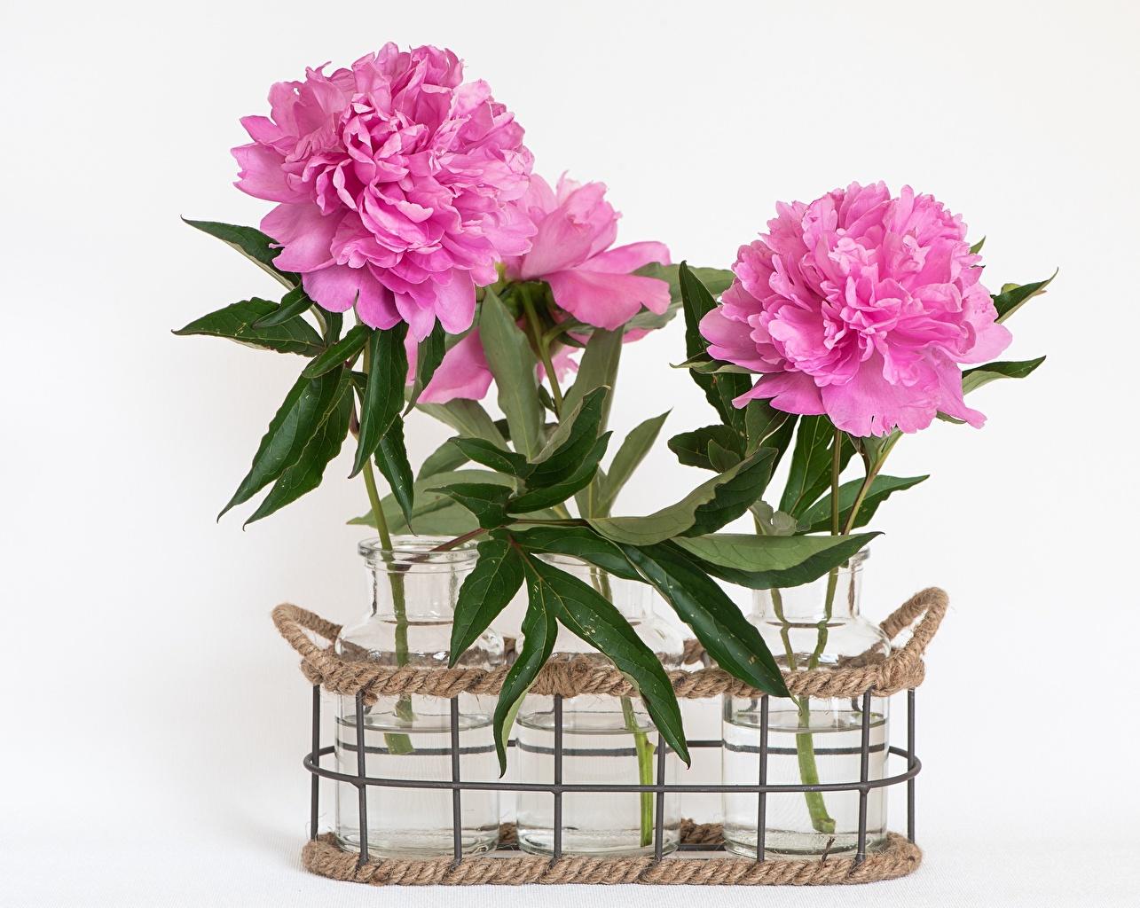 Картинка Розовый пион банке цветок Корзинка Серый фон розовая розовые розовых Пионы Банка банки Цветы Корзина корзины сером фоне