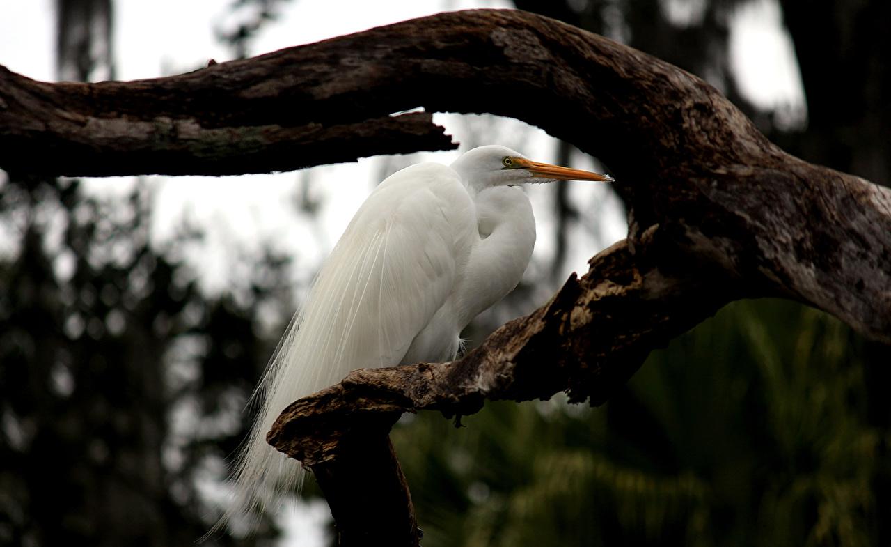 Обои для рабочего стола птица Журавли белые ветка животное Птицы белая Белый белых ветвь Ветки на ветке Животные