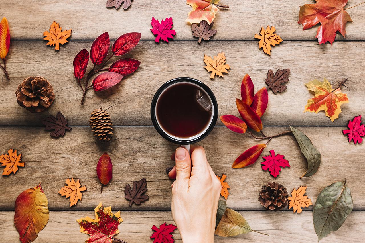 Картинка Листья Чай Осень Руки шишка Кружка Продукты питания Доски лист Листва осенние Еда Пища рука Шишки кружке кружки