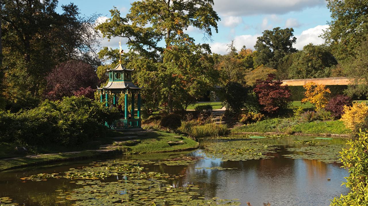 Фотографии Англия Water Garden, Cliveden Осень Природа Пруд Деревья осенние дерево дерева деревьев