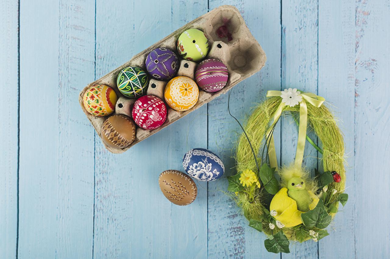 Фотографии Пасха Птенцы Разноцветные яиц гнезда Праздники Доски дизайна птенец яйцо Яйца яйцами Гнездо гнезде Дизайн