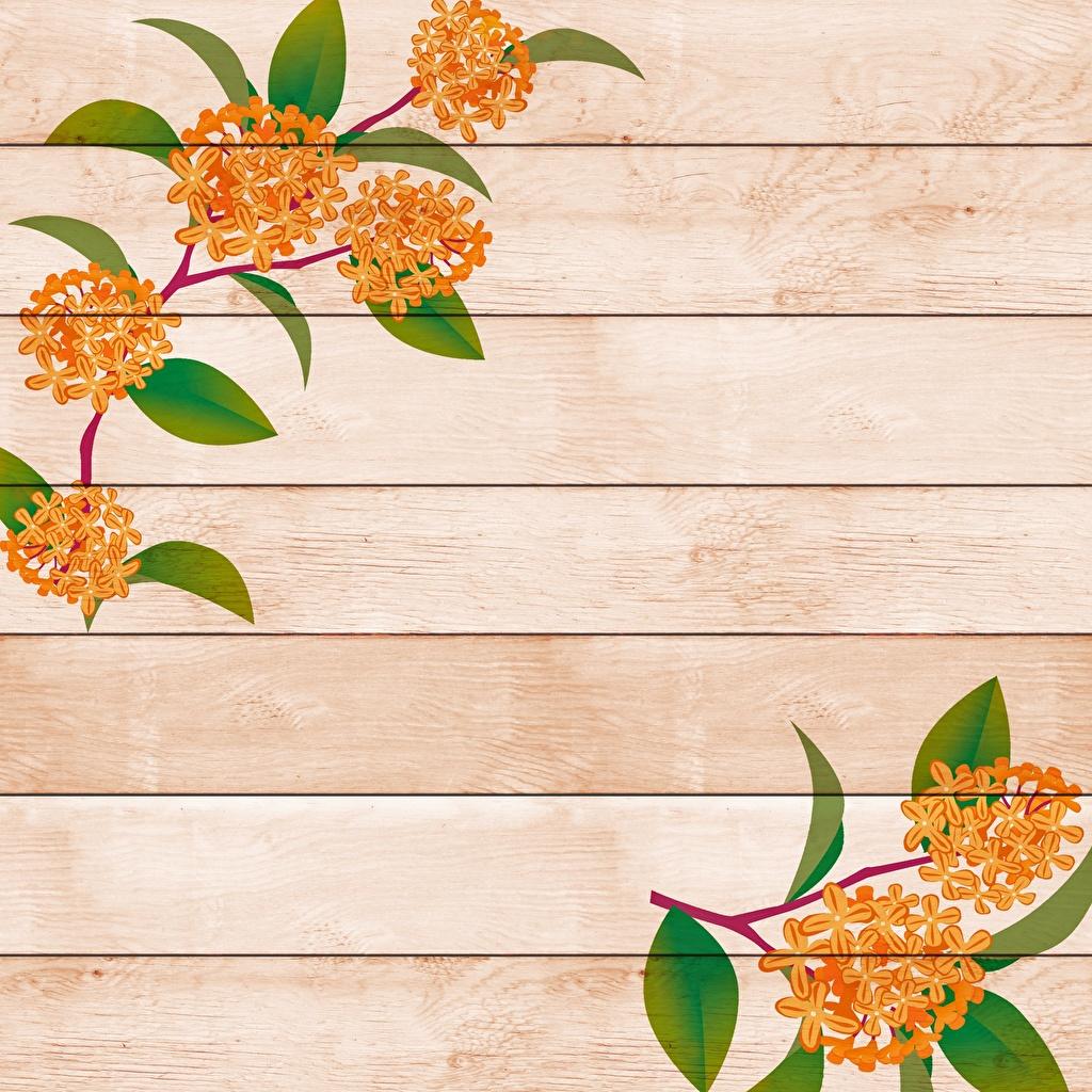 Фотографии Цветы ветка Шаблон поздравительной открытки Рисованные Доски цветок ветвь Ветки на ветке