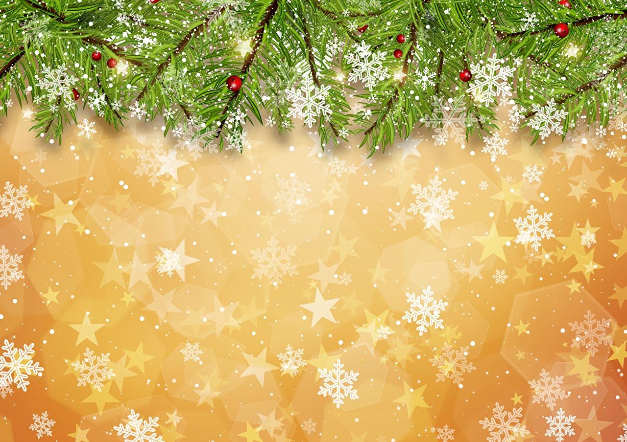 Фотографии Новый год Снежинки Ветки Рождество снежинка ветвь ветка на ветке