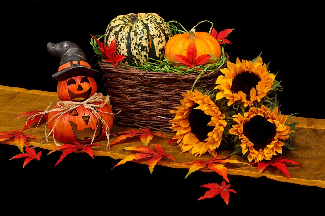 Фотографии Листья шляпы Осень Тыква Хеллоуин Цветы Корзинка Подсолнухи лист Листва шляпе Шляпа осенние хэллоуин цветок корзины Корзина Подсолнечник