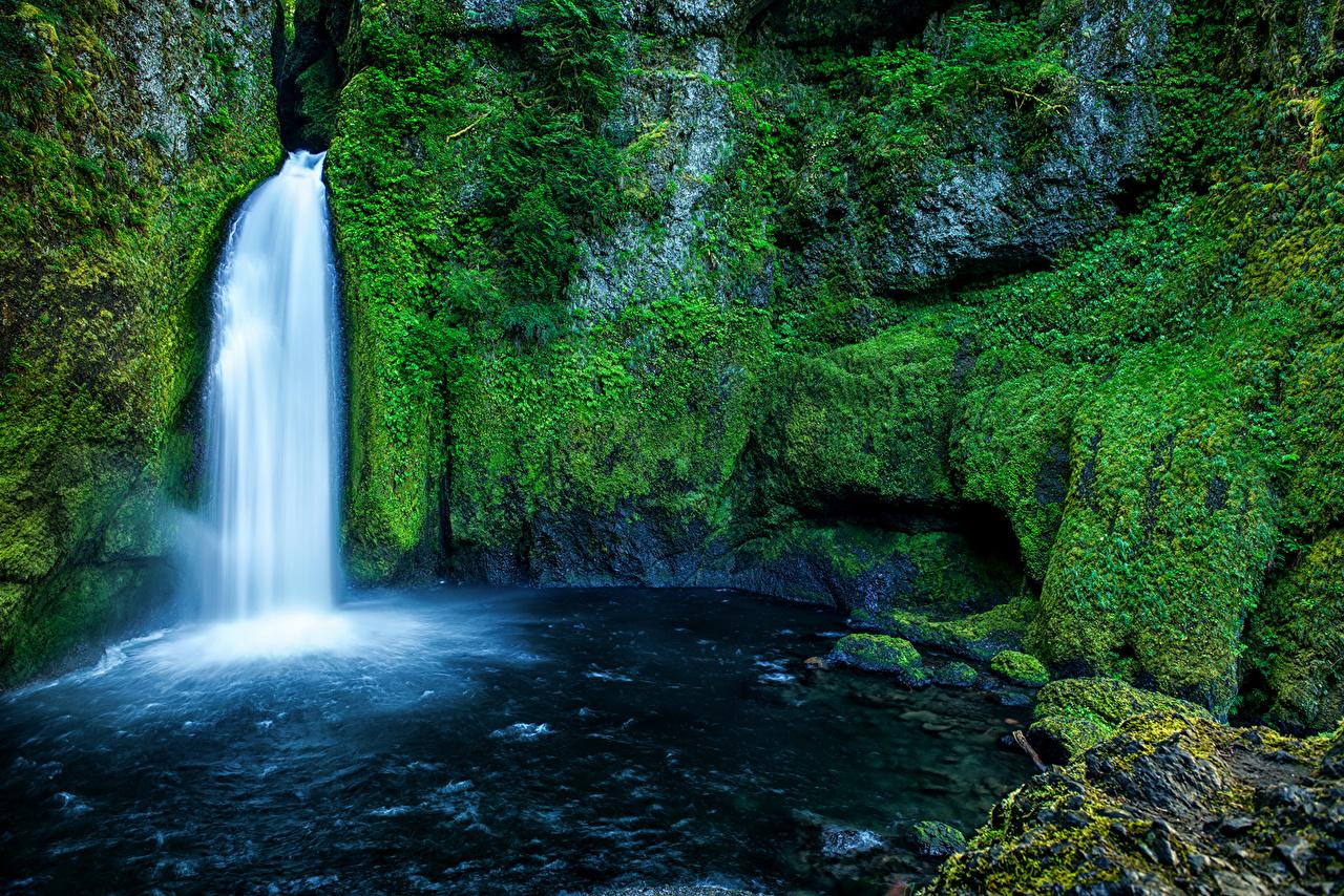 Картинка США Wahclella Falls Oregon Скала Природа Водопады Мох штаты Утес