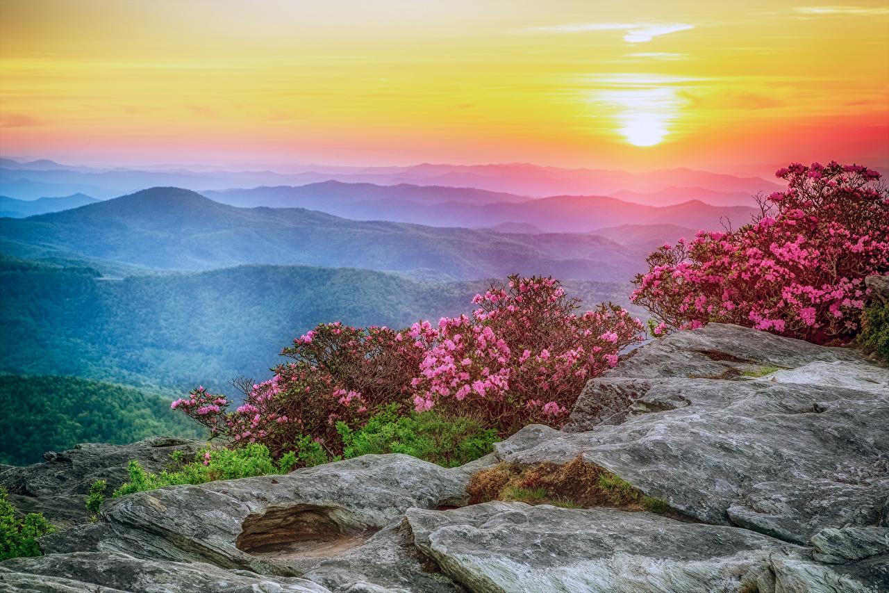 Фотографии США Roan Mountain Rhododendron Gardens Природа Холмы Пейзаж Рассветы и закаты Рододендрон Кусты штаты холм холмов рассвет и закат кустов