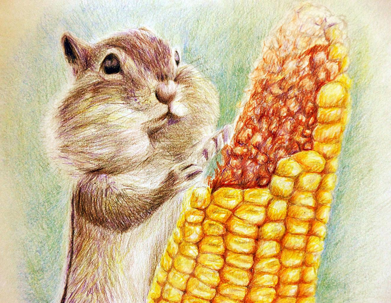 Фото Грызуны Бурундуки Кукуруза животное Рисованные Животные