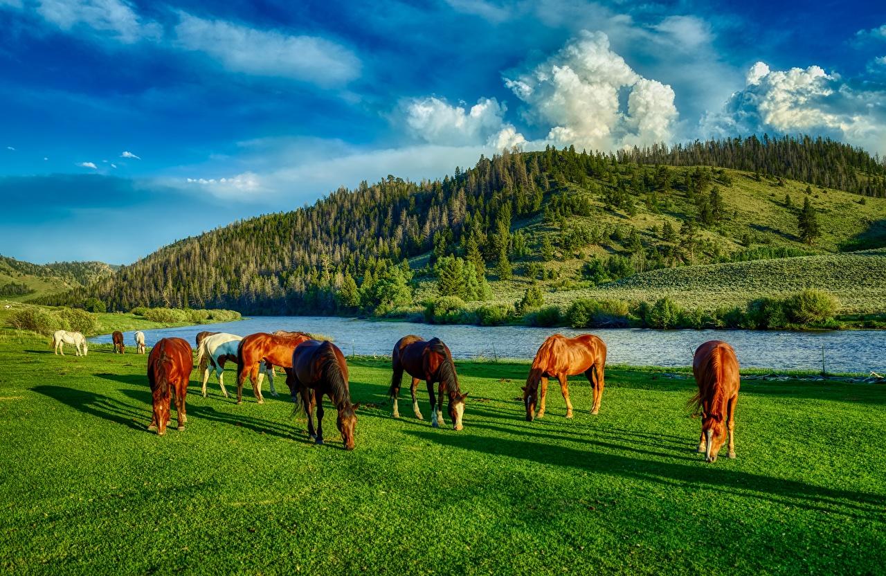 Картинки лошадь штаты Wyoming HDR холм Луга Реки траве Животные Лошади США америка HDRI Холмы холмов река Трава речка животное