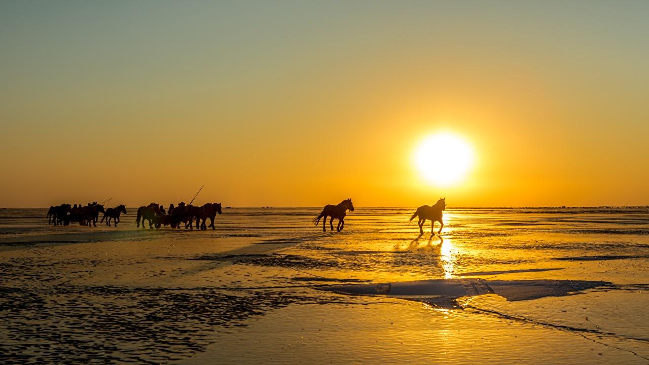 Фото Лошади Солнце Снег Рассветы и закаты Животные
