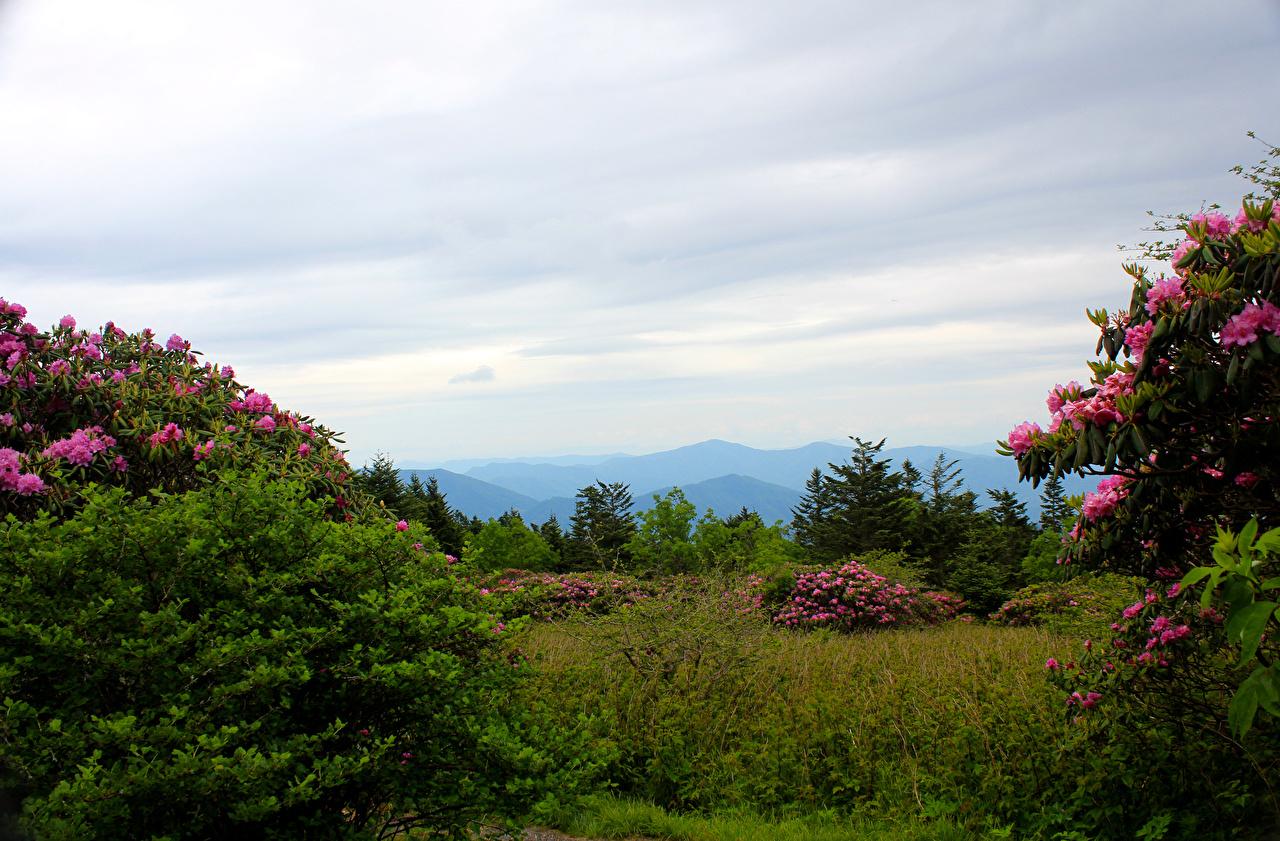 Фото штаты Carolina Roan Mountain Rhododendron Gardens Природа Парки Рододендрон Кусты США америка парк кустов