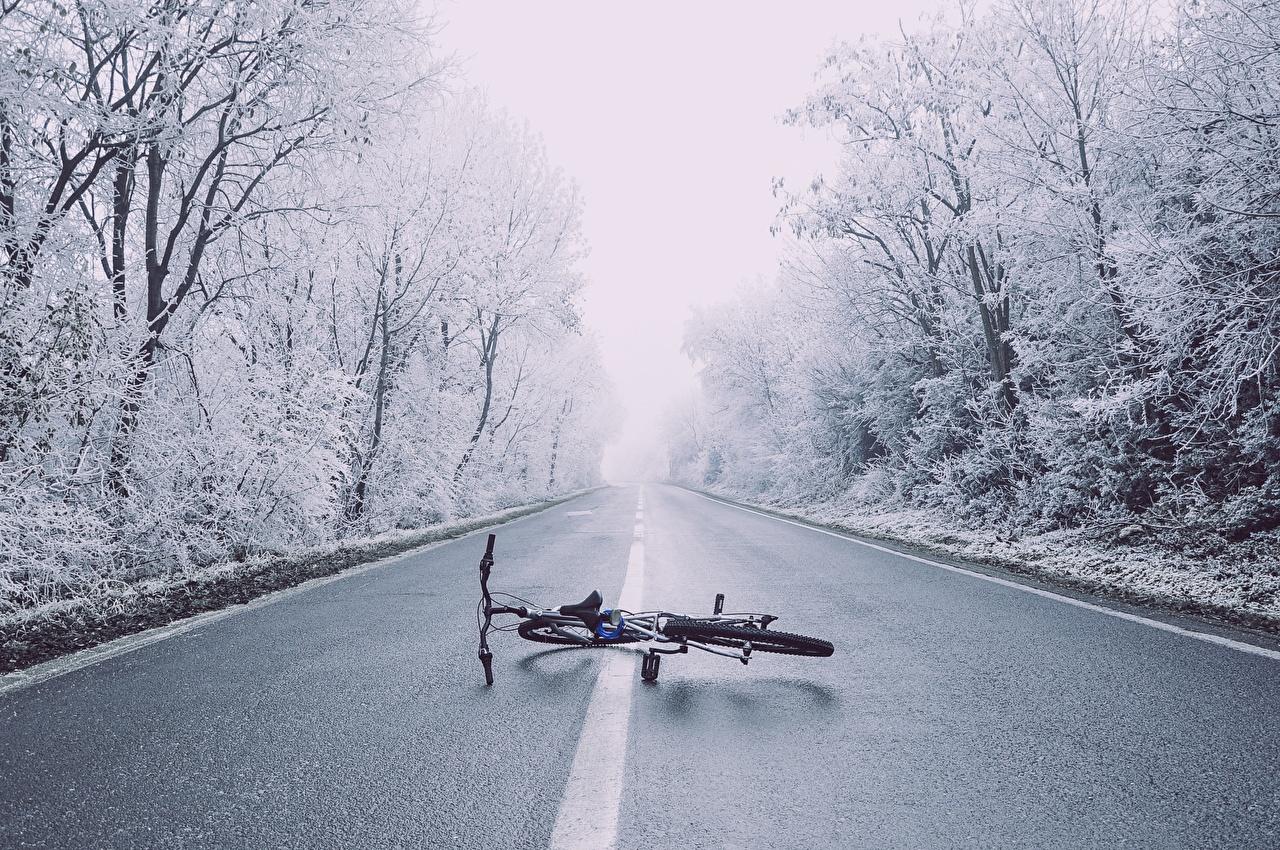 Фотография Велосипед Зима Природа Дороги Асфальт Деревья зимние