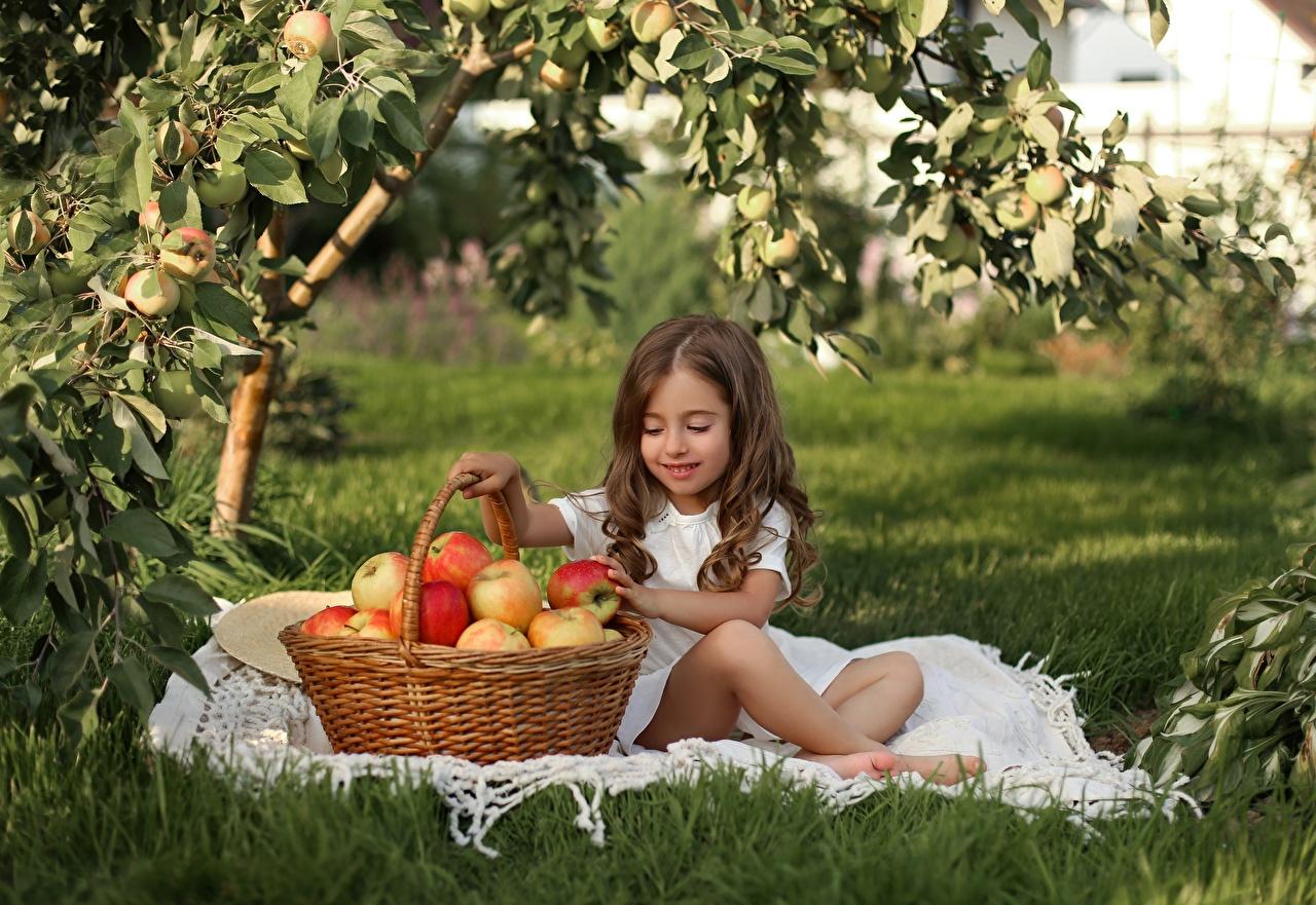 Фотография Девочки шатенки Дети Яблоки Корзина сидя девочка Шатенка ребёнок корзины Корзинка Сидит сидящие