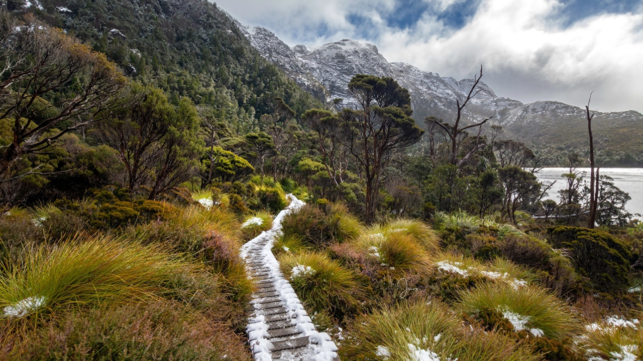 Обои для рабочего стола Австралия Cradle Mountain - Lake St Clair National park, Tasmania Горы тропы Природа лес парк снегу Трава гора Тропа тропинка Леса Снег Парки снега снеге траве