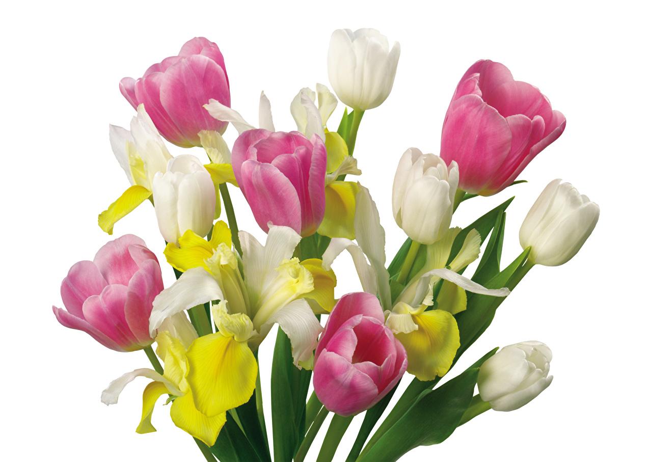 Картинка букет Тюльпаны Цветы Нарциссы белом фоне Букеты тюльпан цветок Белый фон белым фоном