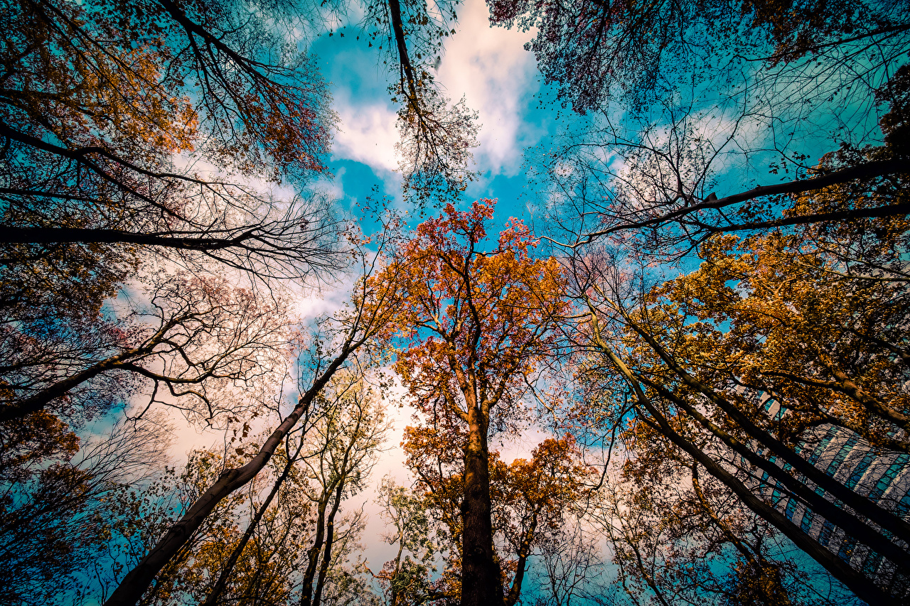 Фотографии Вид снизу Осень Природа Небо на ветке дерева облачно осенние Ветки ветка ветвь Облака дерево облако Деревья деревьев