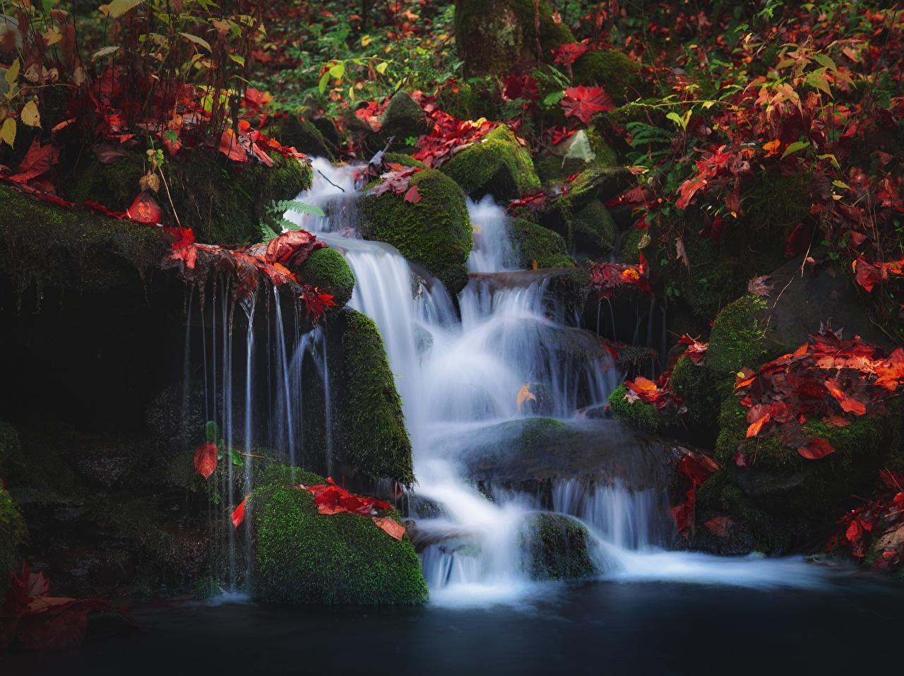 Фотография лист Осень Природа Водопады Мох Камень Листва Листья осенние мха мхом Камни