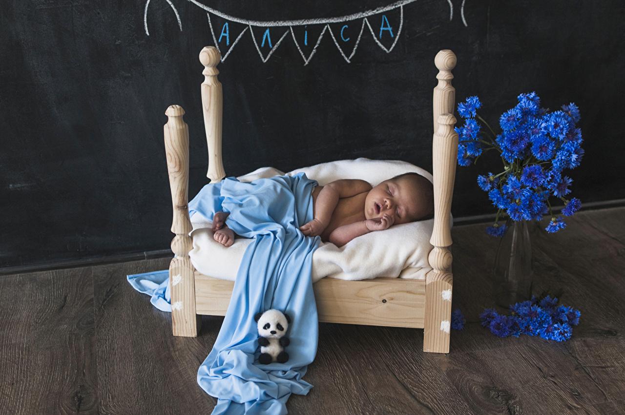 Картинки грудной ребёнок ребёнок спящий Мишки Кровать Васильки младенца младенец Младенцы Дети сон спят Спит Плюшевый мишка постель кровати