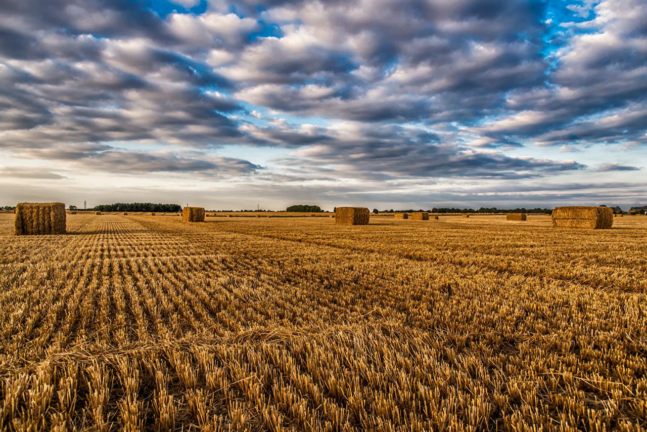 Обои для рабочего стола Англия Природа Поля Небо соломе облако Солома Облака облачно