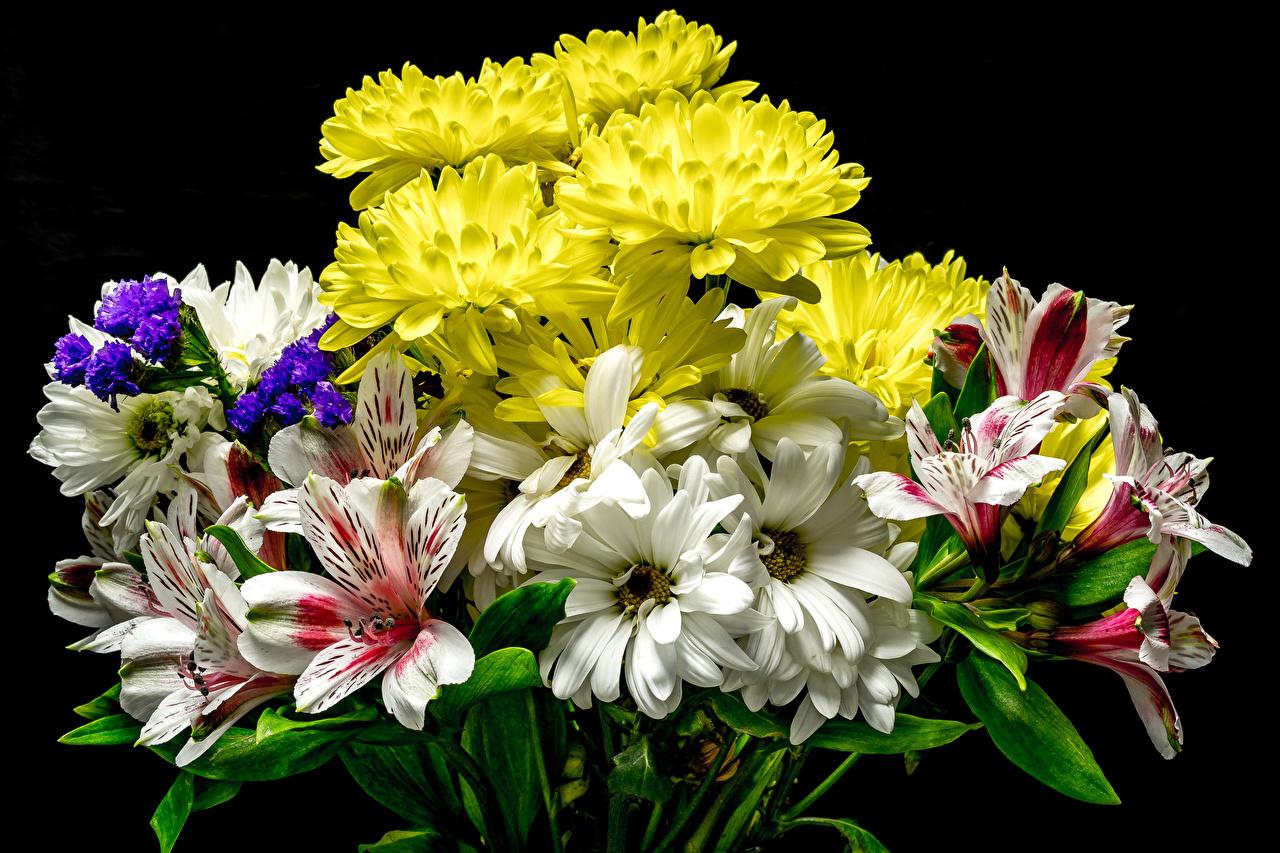 Фотографии Букеты цветок Хризантемы Альстрёмерия на черном фоне букет Цветы Черный фон