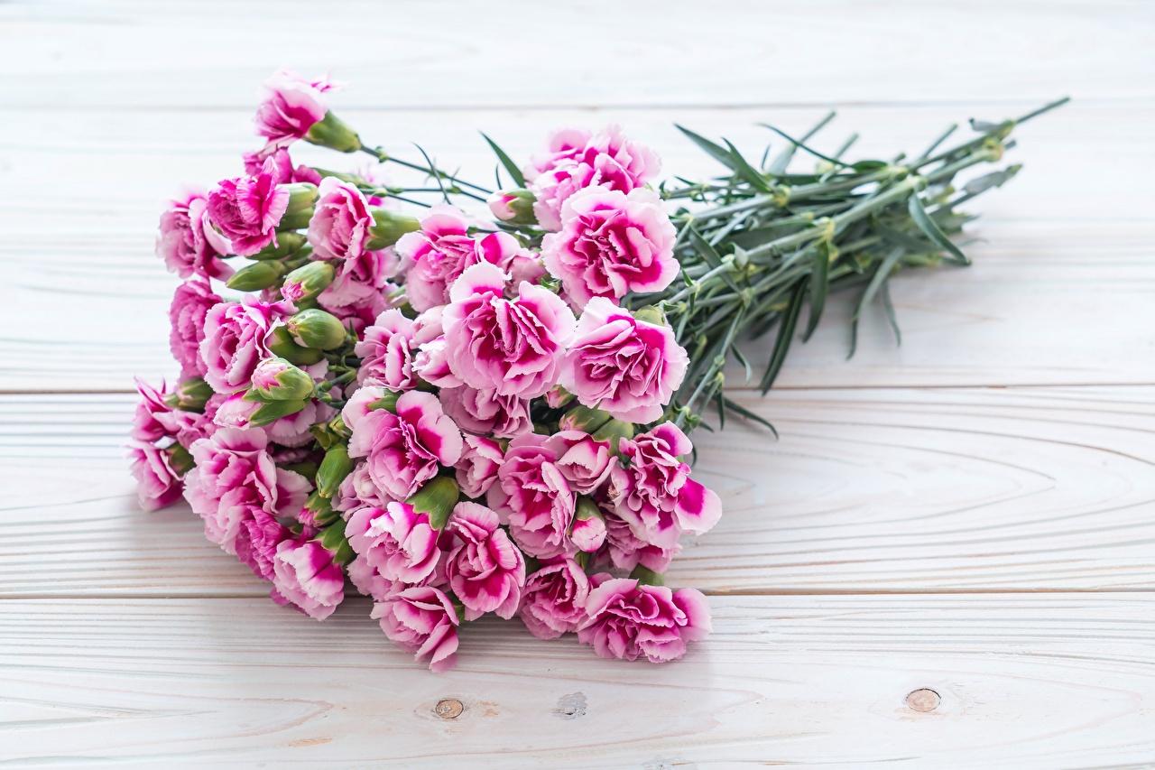Фотографии букет розовая Цветы Гвоздики Букеты розовых розовые Розовый цветок гвоздика