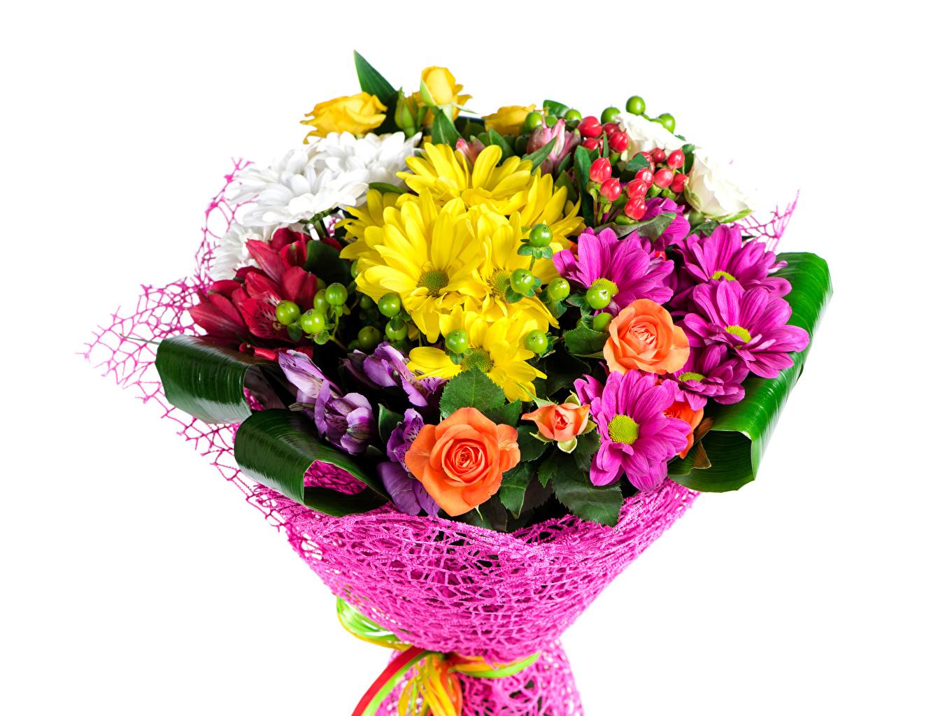 Фото Букеты роза цветок Хризантемы белом фоне букет Розы Цветы Белый фон белым фоном