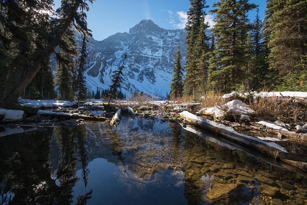 Обои Банф Канада Ель Горы Зима Бревна Природа снега Озеро Парки ели бревно зимние Снег снеге снегу