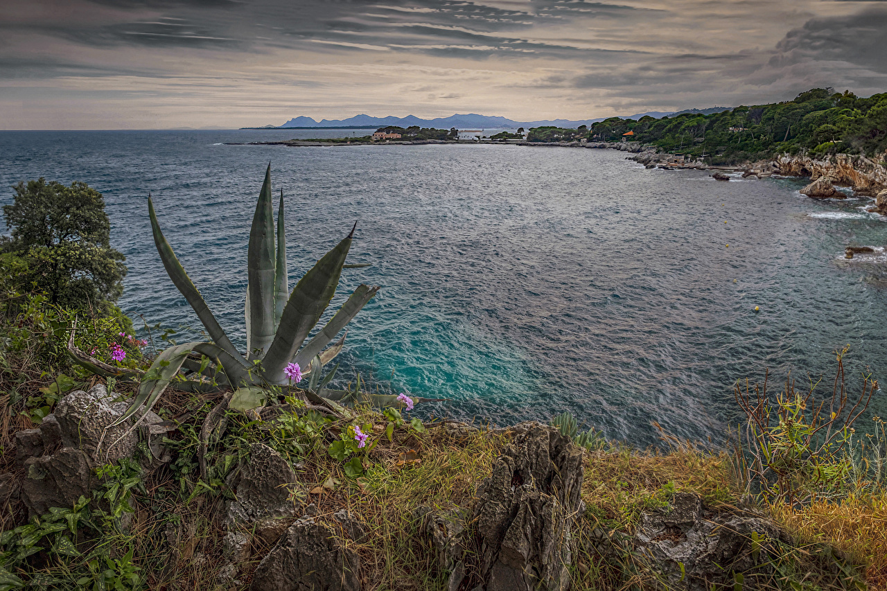 Фото Франция Antibes Природа берег Вечер залива Кактусы Залив заливы Побережье