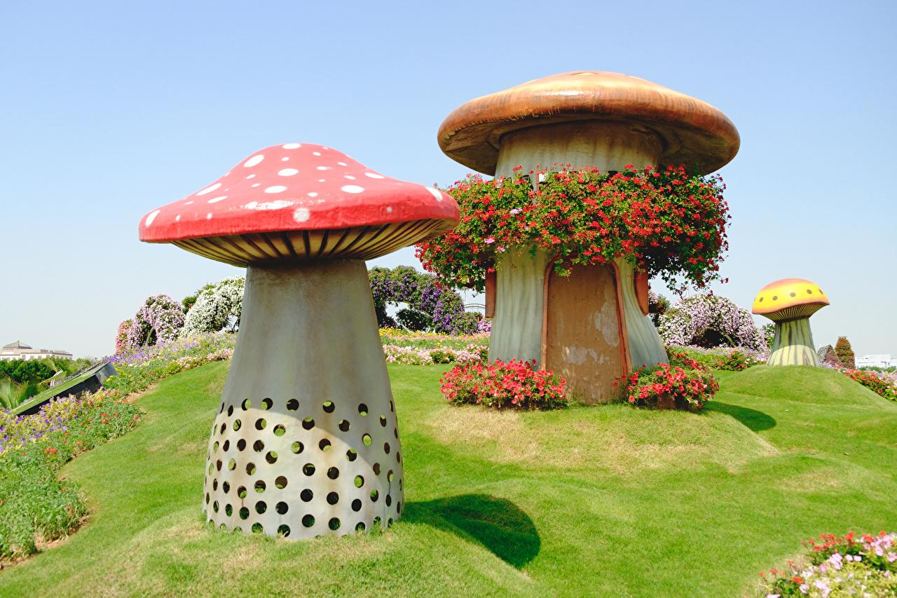Картинки Дубай Miracle Garden Природа парк Петунья Грибы природа Дизайн Парки петуния дизайна