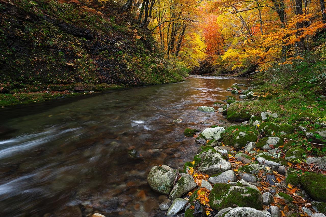 Картинка Листва Природа осенние мхом Реки Камень лист Листья Осень Мох мха река речка Камни