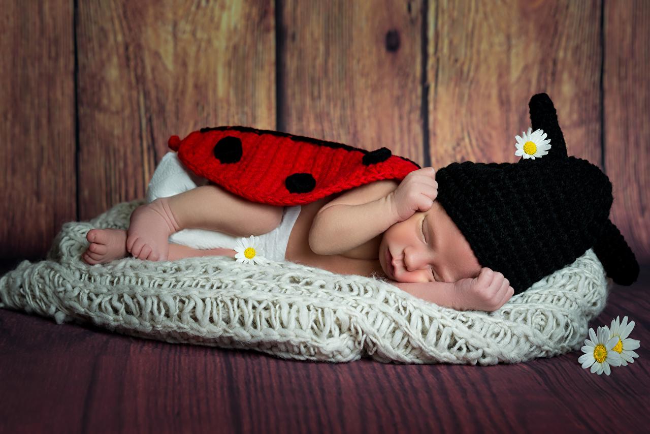 Картинки Младенцы Дети Шапки спящий Стена Доски грудной ребёнок Ребёнок сон Спит стенка