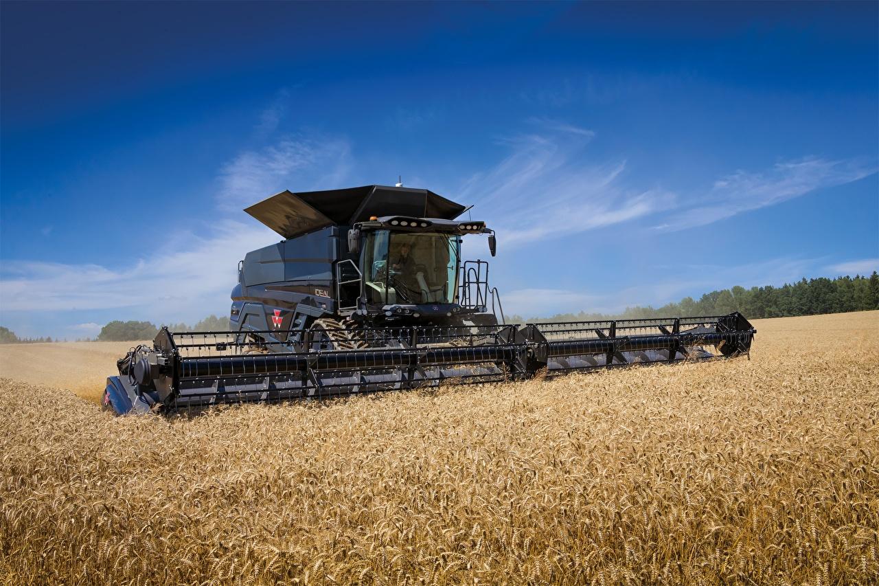 Фото Зерноуборочный комбайн Сельскохозяйственная техника Massey Ferguson Ideal 9T Пшеница Поля