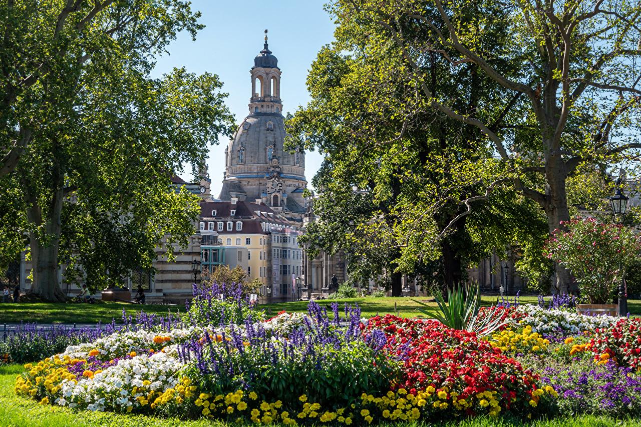 Картинка Дрезден Германия Парки Дома город дерево парк Здания дерева Города Деревья деревьев