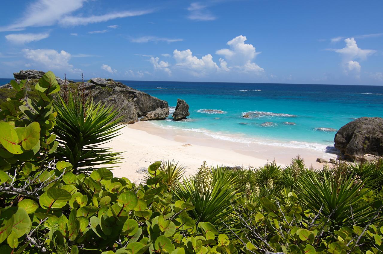 Фотография Великобритания South Shore Park, Bermuda Пляж Океан Природа Остров Побережье пляжа пляже пляжи берег