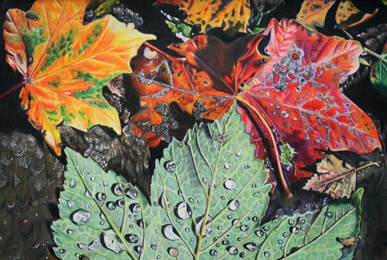 Картинка Листья Осень Природа капля вблизи Рисованные Времена года лист Листва осенние Капли капель капельки Крупным планом сезон года